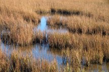 marsh_small